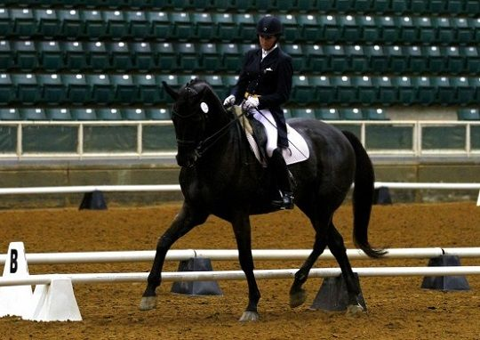 Dressage S Bean Pleads Guilty To Assault Horses Dressage Horse