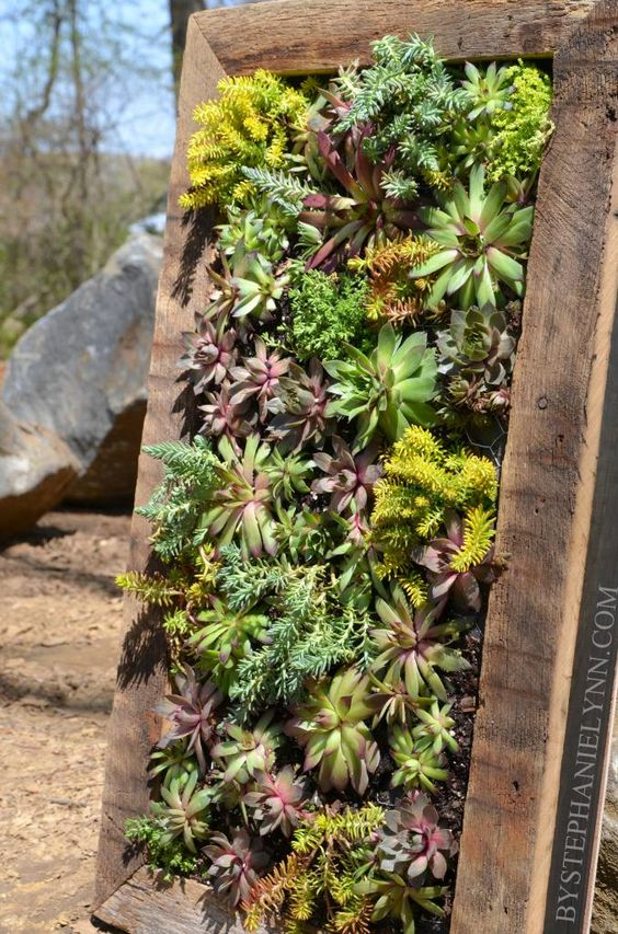 Succulent wall planter gardens succulent frame and for How to make a vertical garden frame
