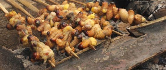 Makanan Khas Papua Ulat Sagu Yang Belum Pernah Orang Ketahui Makanan Makanan Sehat Resep Masakan