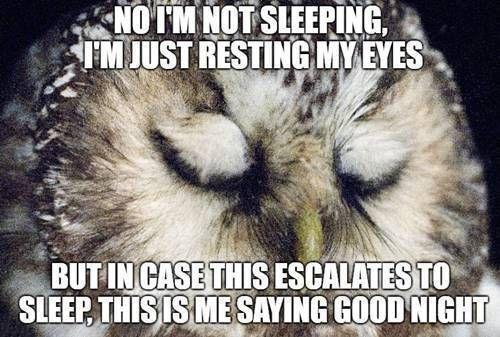50 Cutest Goodnight Memes Sayingimages Com Good Night Meme Good Night Funny Funny Good Night Images