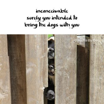 #HaikuByDog inconceivable surely you intended to bring the dogs with you