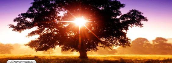 Baum des Lebens Bild