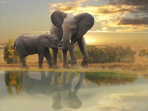 Elephants in the bush  via pixadus