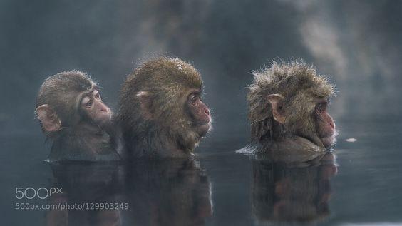 Trio by takeshi_marumoto #animals #pets #fadighanemmd