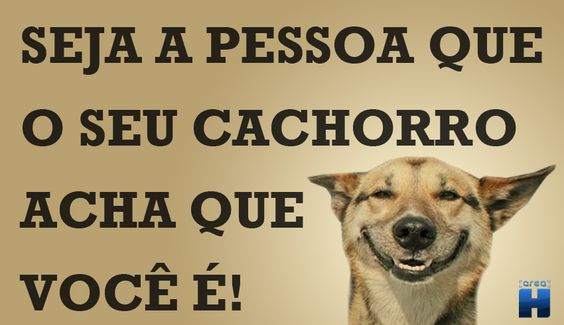Dia do Cachorro!