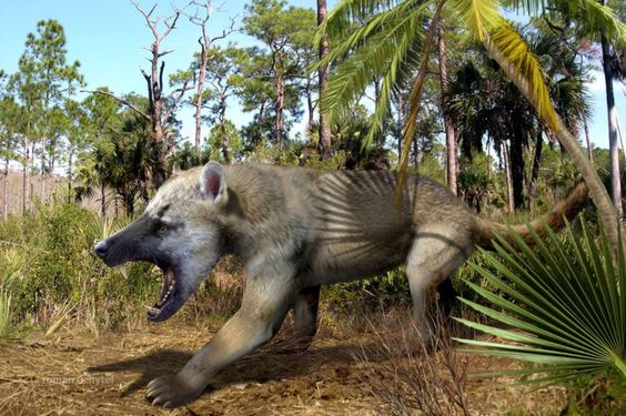 38 million years in the past the beardog was about to take over Ame