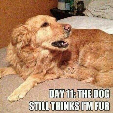 Dog and kitty...the dog still thinks I'm fur