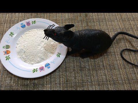 Como Acabar Con Las Ratas En El Campo Pin Em Dicas