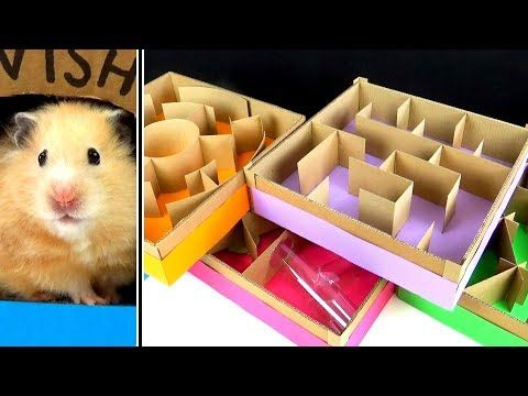 5 Level Maze For Hamsters Who Is The Best Youtube Hamster
