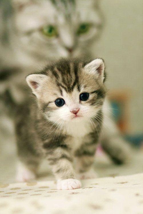 ร ปภาพแมว ล กแมว ล กแมวเหม ยว ส ตว เล ยง แมวน าร ก ล กแมว ท น าร กท ส ดในโลก Cute Animals Cute Baby Animals Cute Animals Puppies