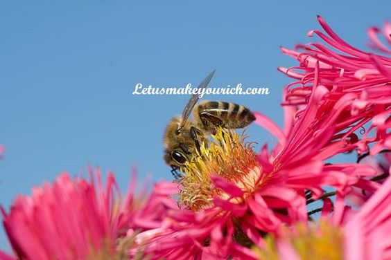 The busy bee has no time for sorrow. ― William Blake