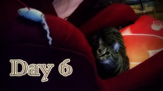 Christmas Time Day 6, 2014  Heute ist schon Nikolaustag (^_^) der 6. Tag in der Weihnachtszeit. Nicht mehr lange und wir holen einen Baum und können die Geschenke darunter verteilen (^_~) mein Mann und Schnucki sind schon ganz aufgeregt und vertreiben sich die Zeit beim spielen (^_^) Viel Spaß beim ansehen (^_~)  #cats #katzen #neko #chat #pets #haustiere #cat_toy #miezekatze #tiger #lion #youtube #new_on_youtube
