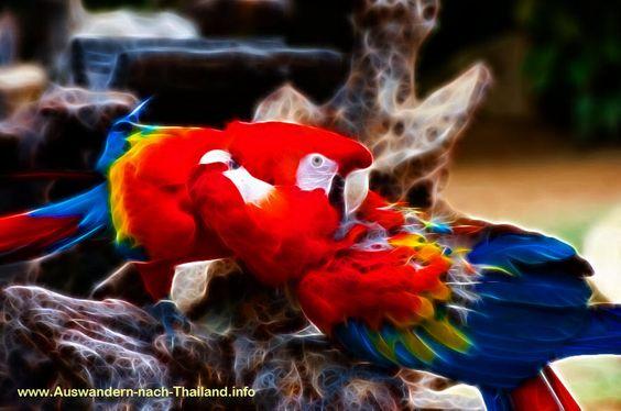 Papagei Ara, ==> klick mich !!