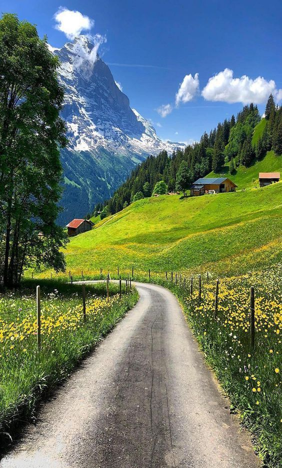 Beautiful Landscapes And Flowers Beautiful Landscapes Nature Photography Nature Pictures