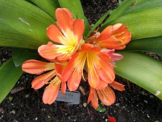 Taken at Buffalo Botanical Gardens
