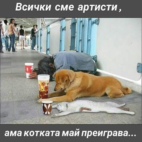 Artist Sofiya Blgariya Zabavno Interesno Nenormalno Kotka Meme Memeta Misteriya Zagadka Haha Smeshno Smyah Smyahdosksvane Haha Hah Memes Dogs Humor