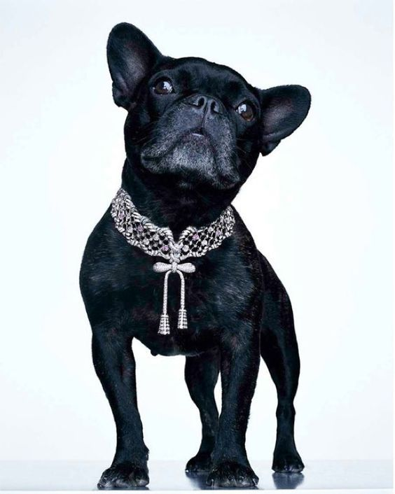 Collar Vs Harness Which Is Best For Your Dog Animals Pets