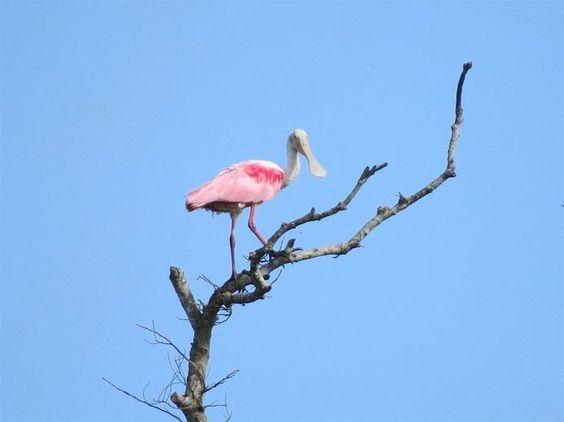 Crooked Tree Wildlife Sanctuary