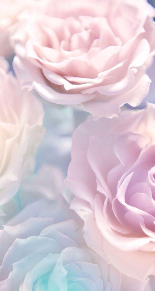 Beautiful Pink Roses Fond D Ecran Pastel Fond D écran
