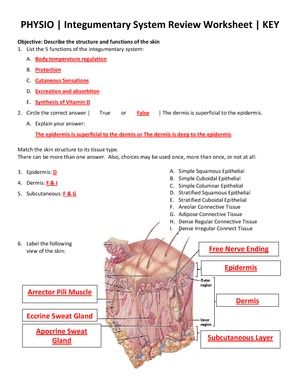 Integumentary System Facts Integumentary System Review