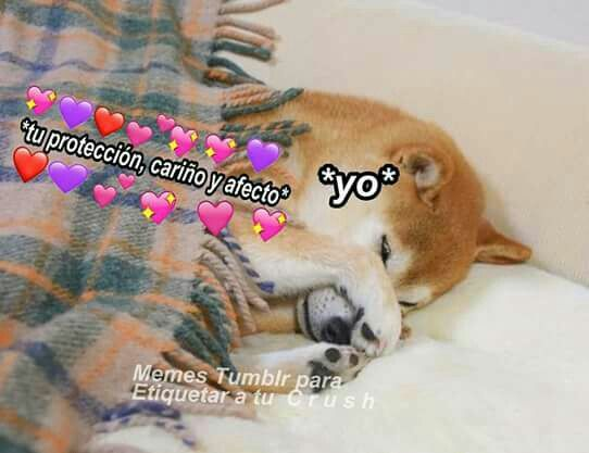 Tu Amor Me Protege Memes Para Mi Novio Amor Animales