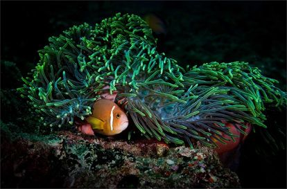 Maravillas submarinas: 40 fotos que te harán sentir en un cuento de Julio Verne