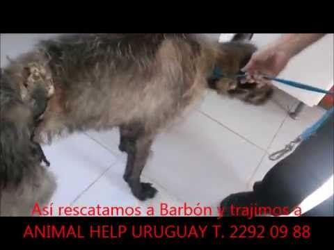 Actualización de rescates en ANIMAL HELP URUGUAY setiembre 2015