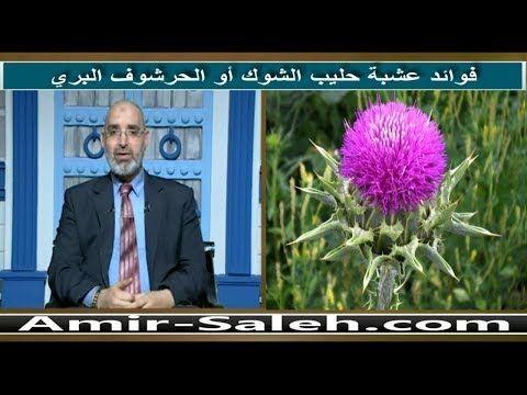 فوائد عشبة حليب الشوك أو الحرشوف البري الدكتور أمير صالح Youtube Natural Remedies Nature Medical