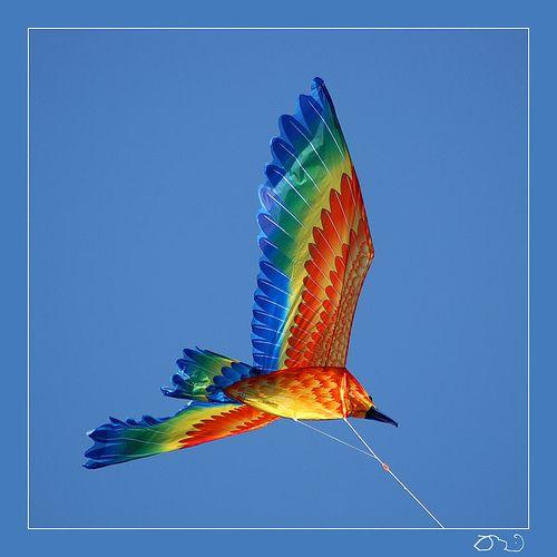 #5 Fly a kite