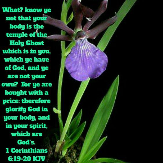 1 Corinthians 6:19-20 (KJV)