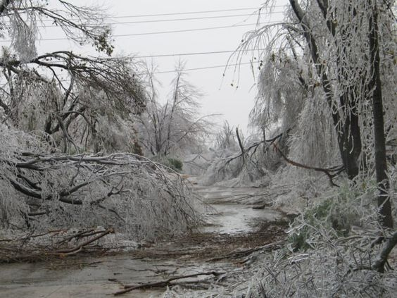 Millions of trees suffered major damage as ice snapped them in half. It was a constant noise of crackling outside, as one tree after another fell to the ground.