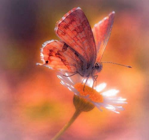 Mensaje de las Mariposas - Es Tiempo de Trabajar Menos