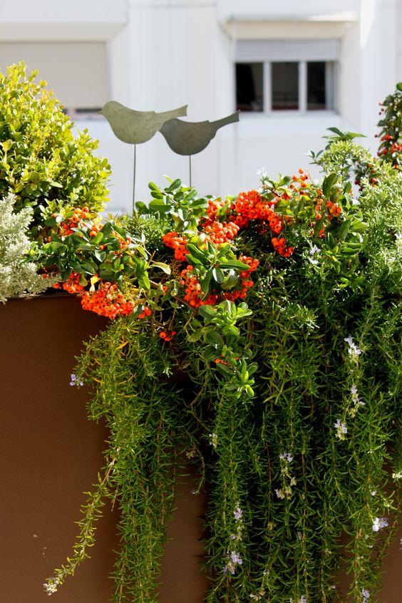 jardin en terraza con colores de otoño #paisajistas #jardines #otoño ...