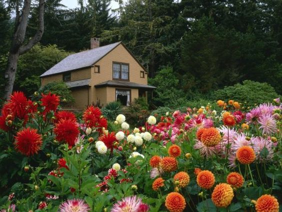 garden house and dahlias shore acres state park