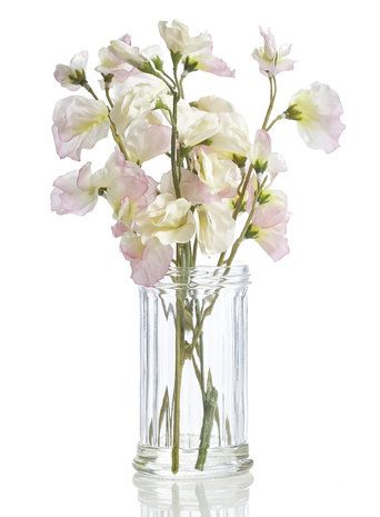 Holly Willoughby Pink Sweet Pea in Ribbed Jar