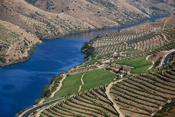 The vineyards that produce port wine are common along the hillsides