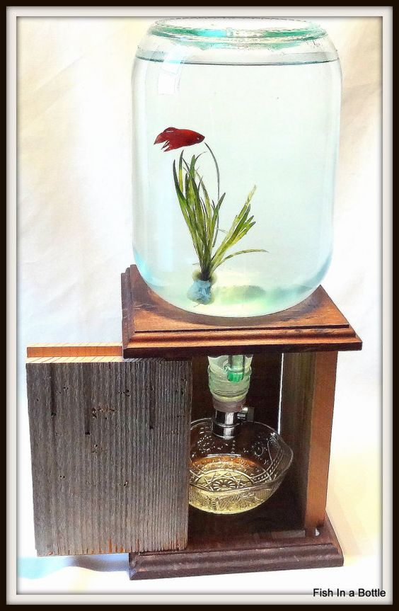 Fish In A Bottle Self Cleaning Fish Tank All Dressed Up