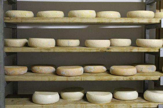 gustosi #formaggi di #malga del #trentino