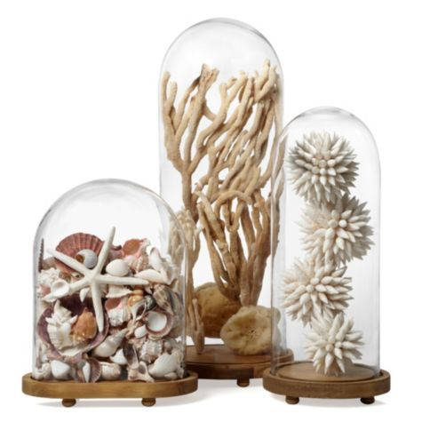 Glass Bell Jar. Great for displaying whatever anyone in house collects.