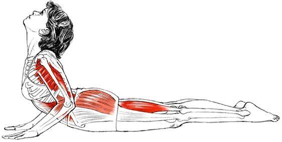 ¿Quieres aprender a hacer Bhujangasana o asana de la cobra y experimentar sus beneficios?. Hoy te hablamos sobre esta postura.  Aprende a hacer esta asana ya  practicar yoga en casa con el curso de yoga on line de www.unrespiro.es por 4 euros al mes o 20 euros el curso completo de 24 clases de 30 minutos cada una. www.unrespiro.es Técnicas de desarrollo y evolución personal on line (yoga, meditación, relajación, mind fulness, pranayama...)