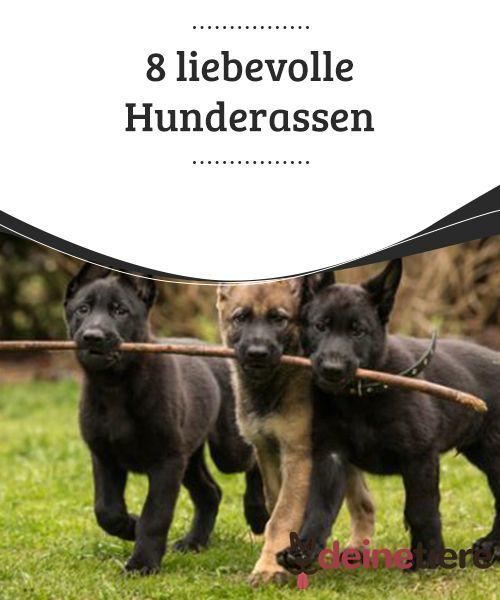 8 Liebevolle Hunderassen Mit Bildern Hunde Rassen Hunde
