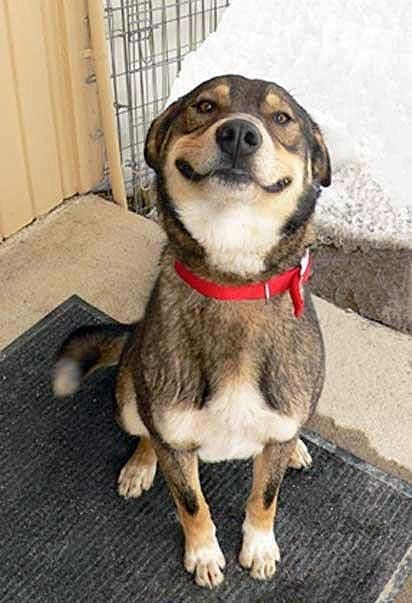 Smiling rescue dog posted by A Dogs Purpose