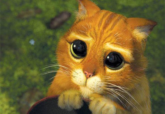 Curiosidades de los gatos, que sus dueños deben conocer