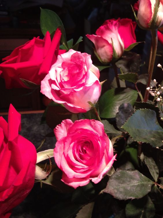 Roses that my husband and daughter gave me for Mother's Day.
