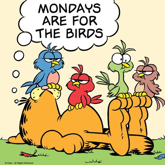 Mondays are for the Birds!