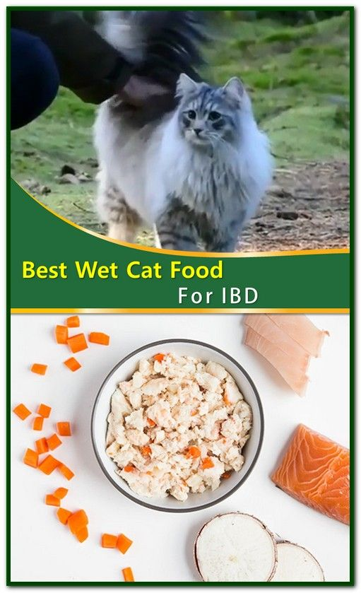 Best Wet Cat Food For Ibd Sensitive Stomach Cat Food Best Cat Food Cat Food