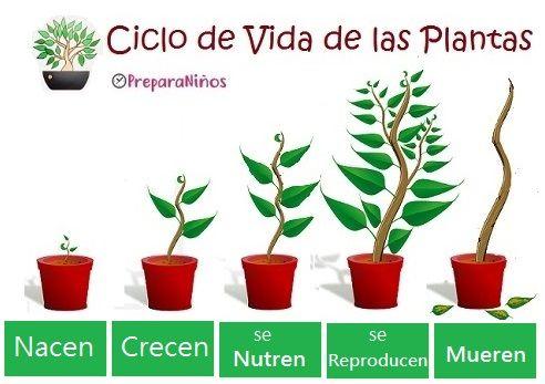 Las Plantas Funciones Vitales Ciclos De Vida De Las Plantas Ciclo De Vida De Las Plantas Fotosintesis De Las Plantas