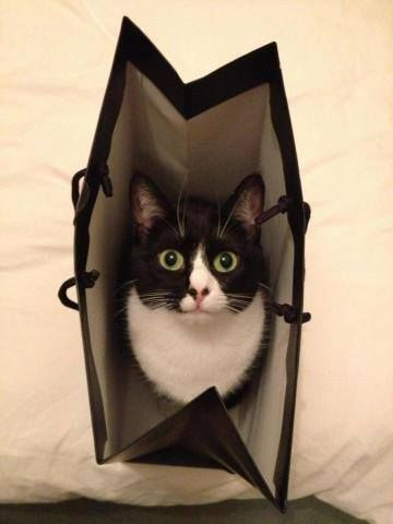 Cat-In-A-Bag #lolcats #lol #funny #humor #cats #kittens #animals