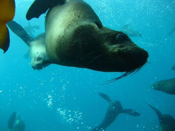 Our seals here in Cape Town are very playful and can often come close enough to nudge you.