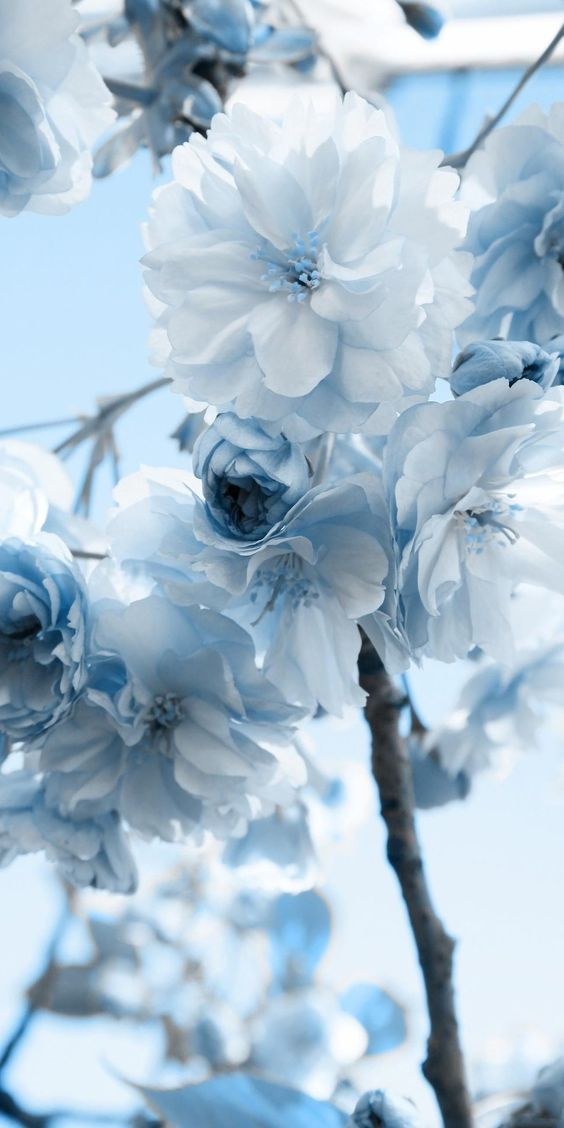 Pin By Nisanbi On Roses And Flowers Blue Flower Wallpaper Blue Wallpaper Iphone Blue Flowers Coolest flower wallpapers hd